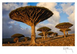 Dragon Tree, fotografía Oriol Alamany